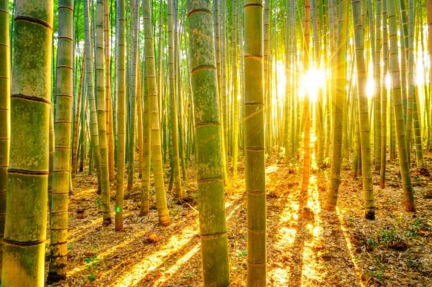 Manana Fengshui Clima Tubos Brillante 1232 4052