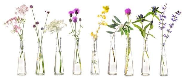 Plantas y flores de bach